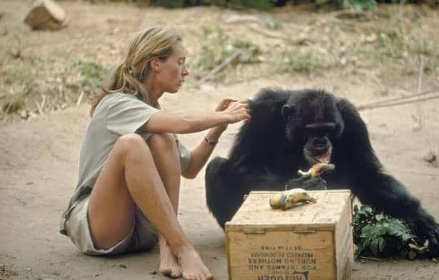 Rise of the female adventurer Part 3: Jane Goodall