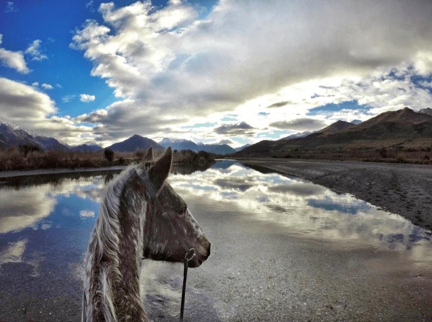 Horse Trekking Guide in New Zealand